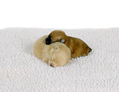 PUP 27 RS0003 01