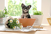 PUP 27 YT0006 01