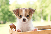 PUP 27 YT0009 01