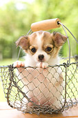 PUP 27 YT0011 01