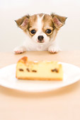 PUP 27 YT0013 01