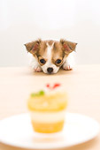 PUP 27 YT0014 01