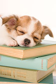 PUP 27 YT0017 01
