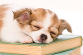 PUP 27 YT0018 01