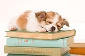 PUP 27 YT0019 01