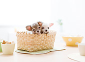PUP 27 YT0024 01