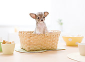 PUP 27 YT0025 01