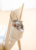 PUP 27 YT0027 01