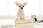 PUP 27 YT0030 01