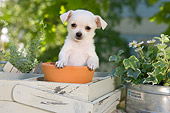 PUP 27 YT0032 01