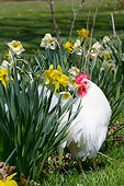 BRD 14 LS0068 01