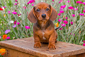 PUP 28 BK0003 01