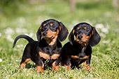 PUP 28 CB0002 01
