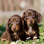 PUP 28 CB0004 01