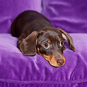 PUP 28 CB0005 01