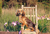 PUP 28 CE0012 01