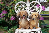PUP 28 CE0015 01