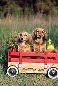 PUP 28 CE0016 01