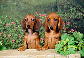 PUP 28 FA0001 01