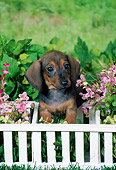 PUP 28 FA0006 01