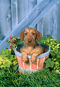 PUP 28 FA0010 01
