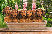 PUP 28 JE0001 01