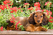PUP 28 JE0005 01