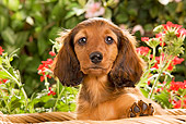 PUP 28 JE0006 01