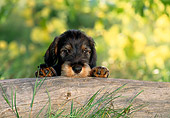 PUP 28 KH0005 01