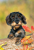 PUP 28 KH0006 01