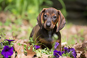PUP 28 LS0002 01