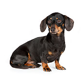 PUP 28 RK0014 01