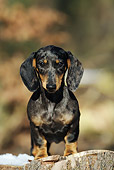 PUP 28 SS0003 01