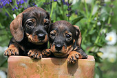 PUP 28 SS0005 01