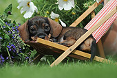 PUP 28 SS0007 01