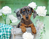 PUP 28 XA0001 01
