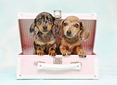 PUP 28 XA0002 01