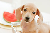 PUP 28 YT0024 01