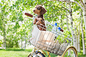 PUP 28 YT0029 01