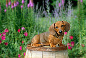 PUP 28 CE0005 01