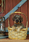 PUP 28 CE0006 01