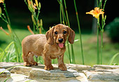 PUP 28 CE0009 01