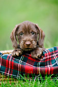 PUP 28 KH0002 01