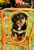 PUP 28 RC0001 01