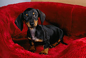 PUP 28 RK0007 01
