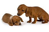PUP 28 RK0009 01