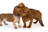 PUP 28 RK0011 01
