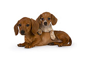 PUP 28 RK0012 01