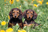 PUP 28 SS0001 01