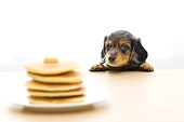 PUP 28 YT0002 01